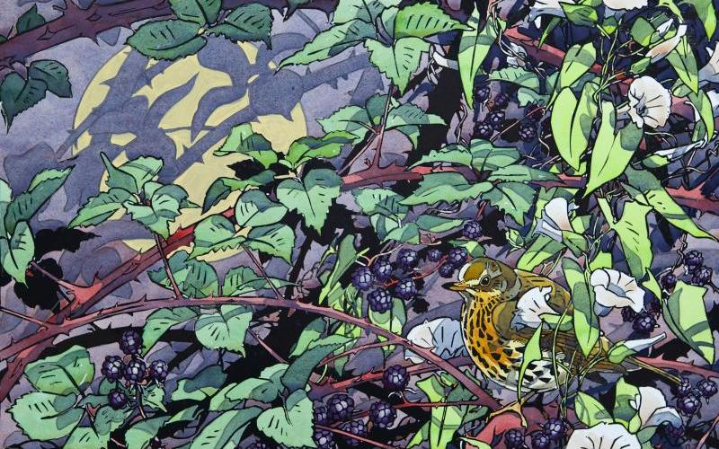 Evening Song Thrush by Andrew Haslen