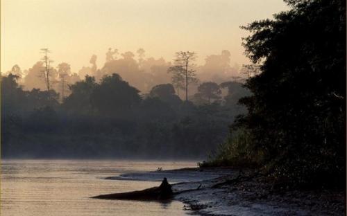 Kinabatangan forest at sunset © HUTAN