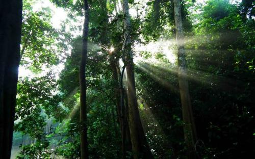 Lower Kinabatangan Rainforest © Rob Colgan