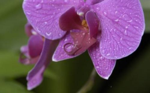Sabah flora © Kirsty Burgess
