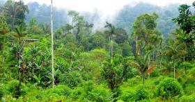 Rainforest reserve Río Canandé