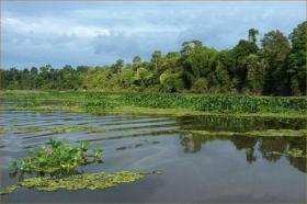 Oxbow lake, Kinabatangan, Borneo