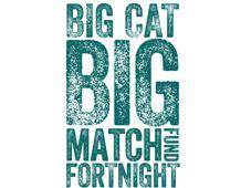 Big Cat Big Match logo.