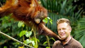 Chris Packham with an Orang-utan