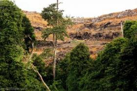 Degraded landscape, Borneo.