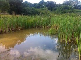 Pond at Kites Hill