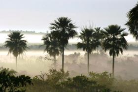Chaco-Pantanal landscape