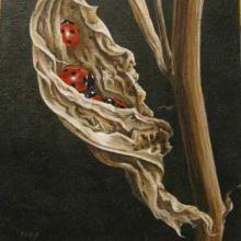 Seven-spot Ladybirds hibernate in the curl of a dead leaf (painting).