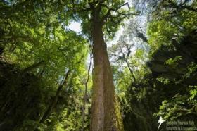 Forest in Sierra Gorda.