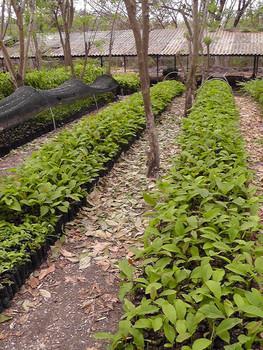 Tree nursery in Cerro Blanco