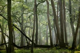 Tropial forest India.