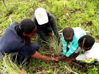 FoKP planting tussock grass