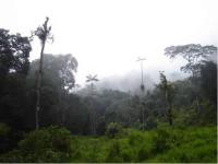 Jambué Rainforest Reserve, Ecuador