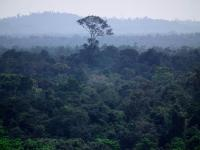 Aerial view of Borneo rainforest. © Rob Colgan.