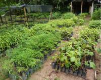 REGUA Tree Nursery